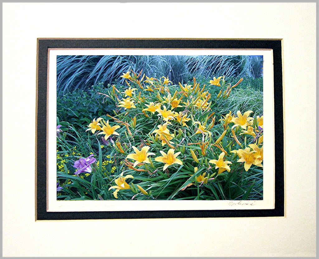 Lilies and Seagrass Matted Print