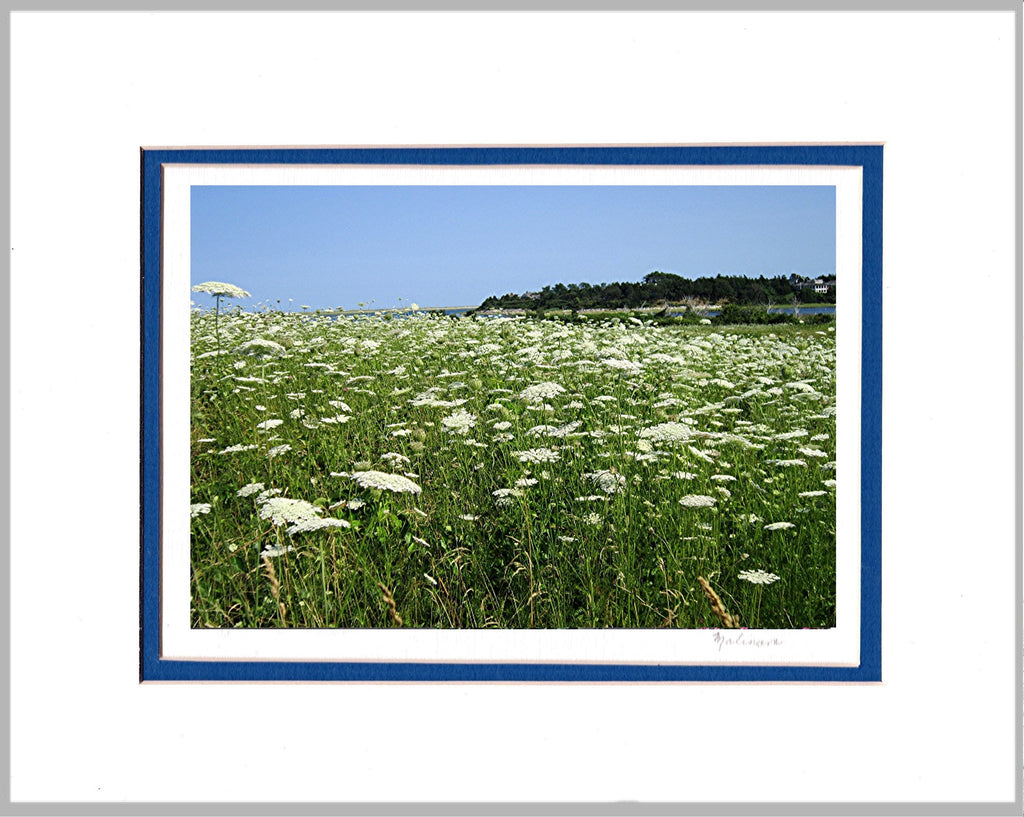 Queen's Lace Matted Print