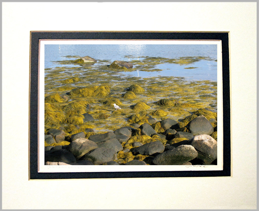 Rocks and Seaweed Matted Print
