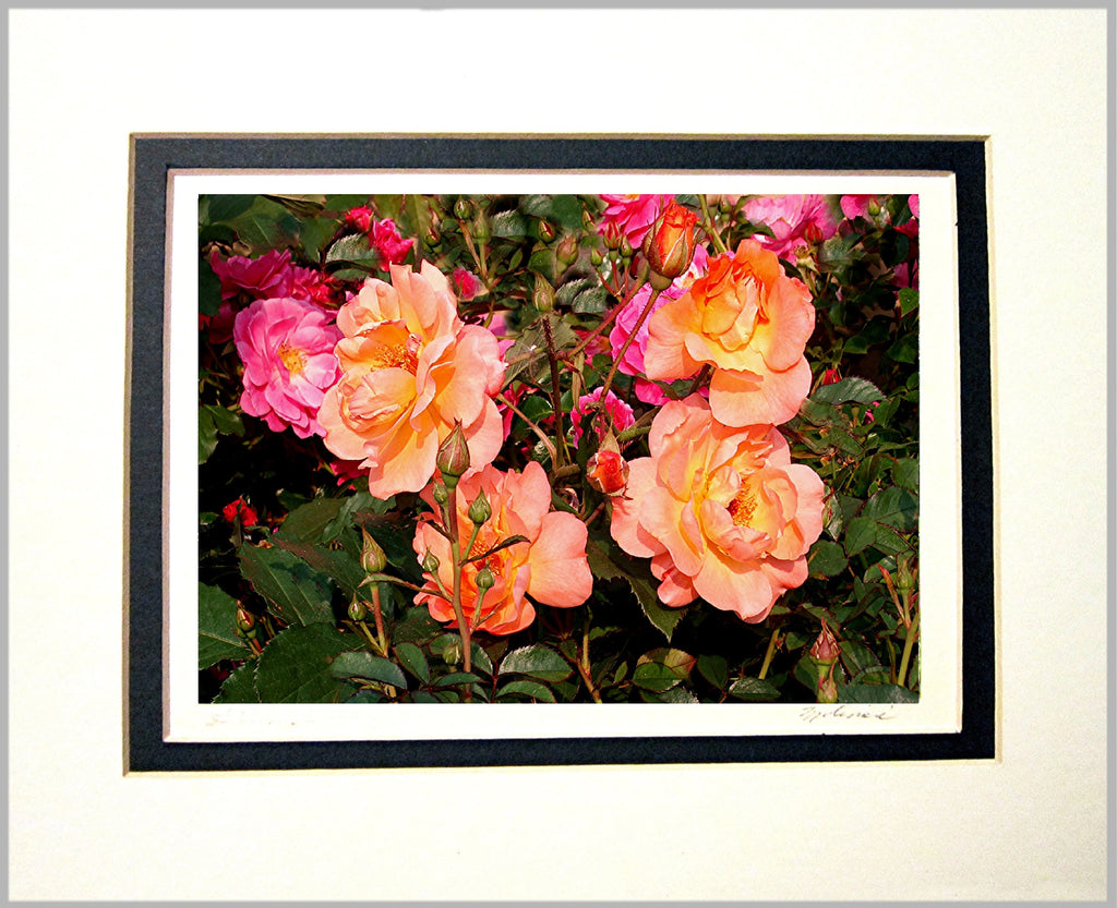 Roses Matted Print