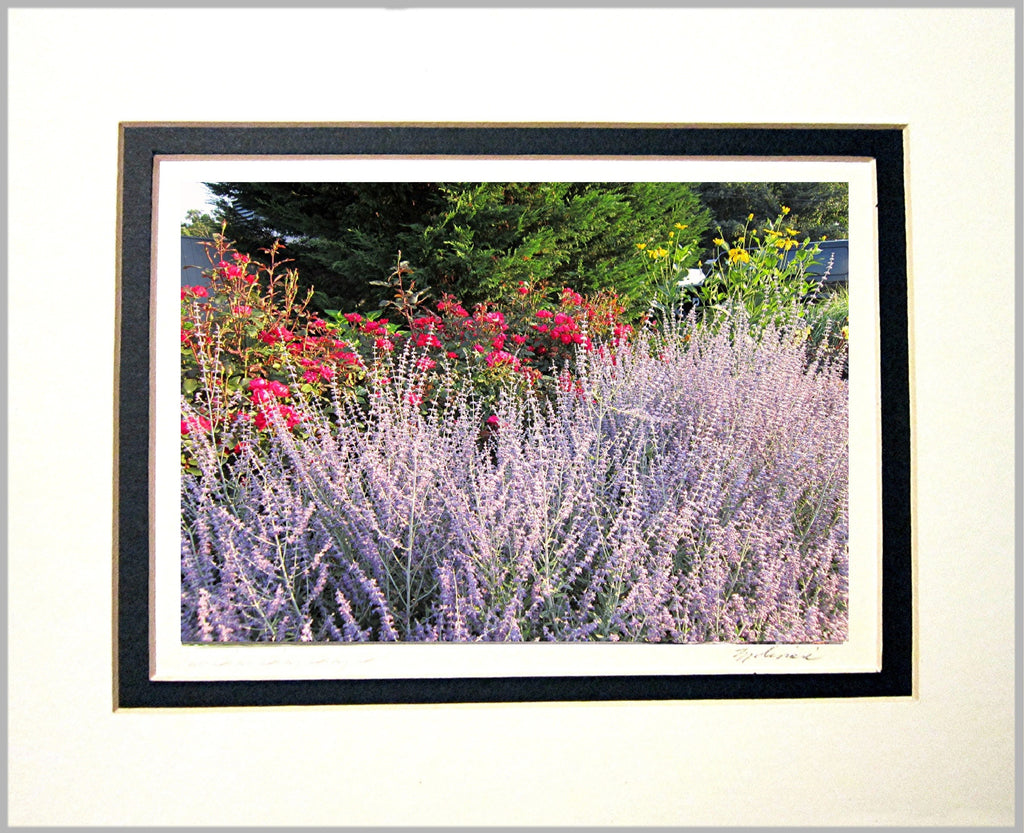 Summer Colors Matted Print