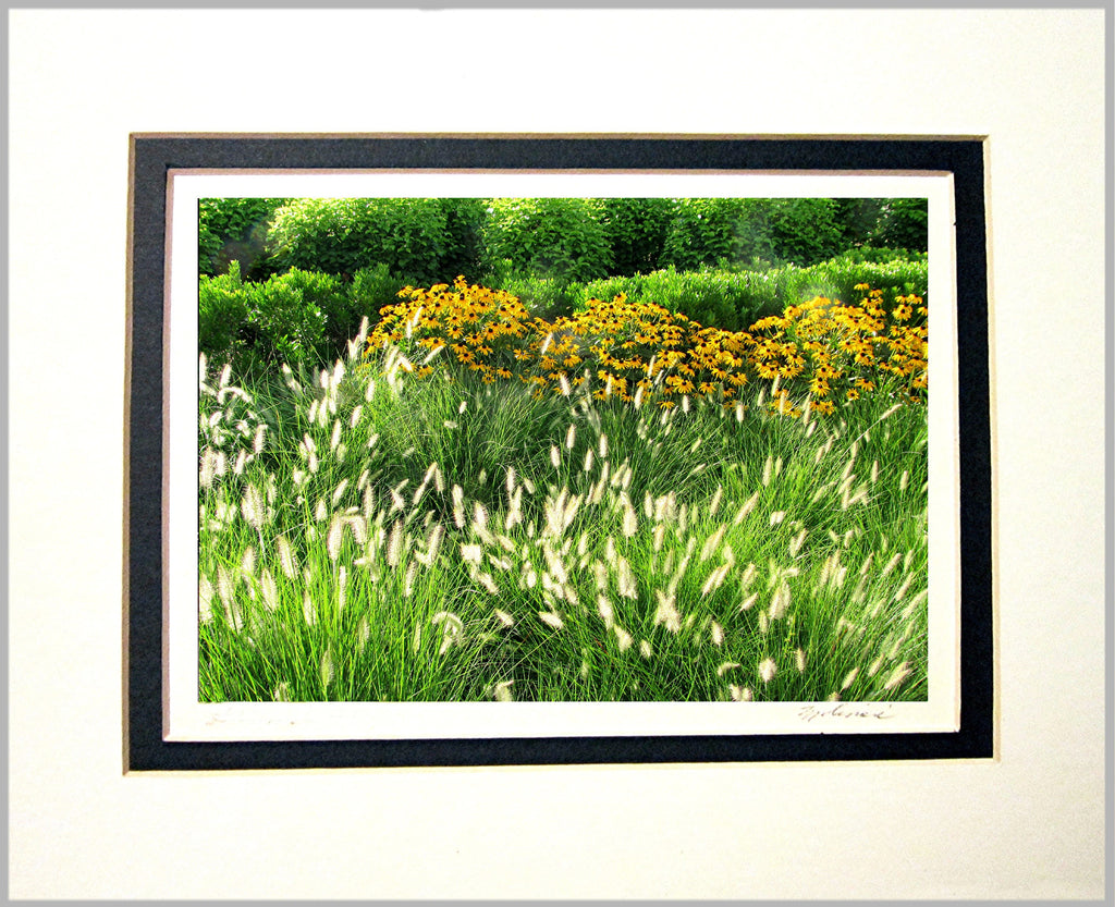 Summer Day Matted Print
