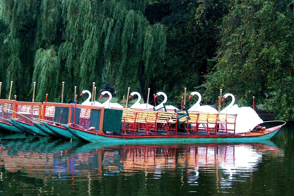 Swan Boats at the End of the Day