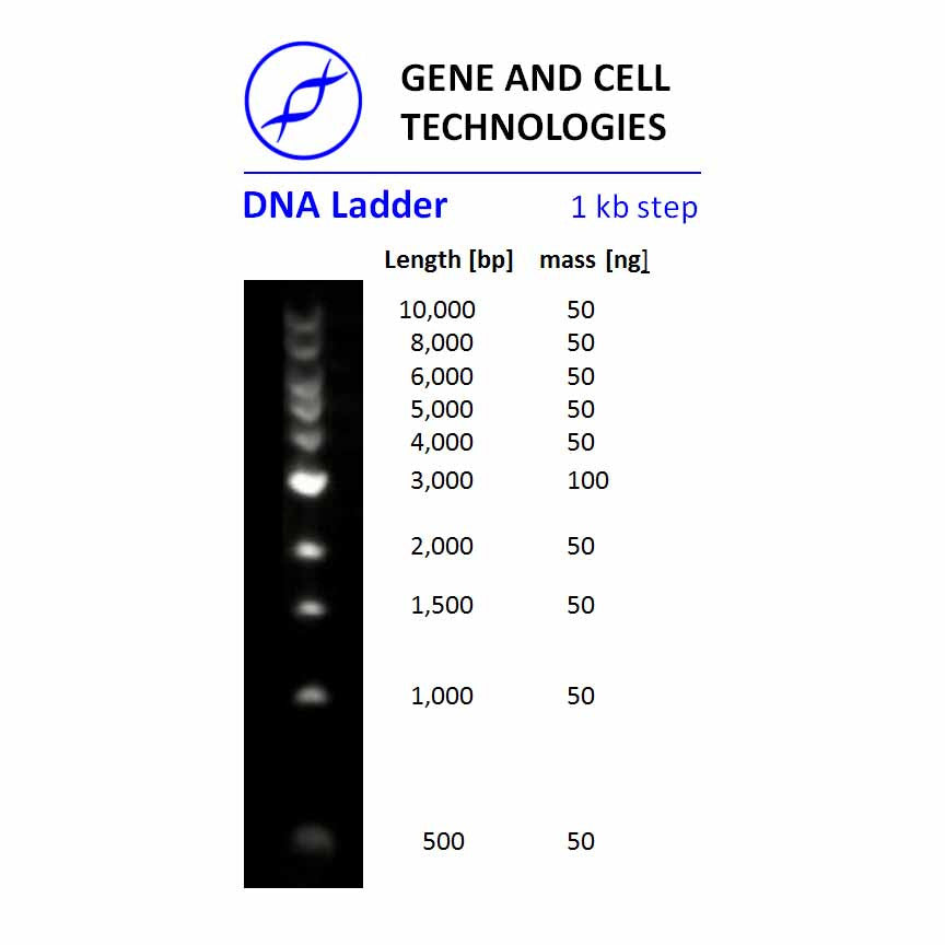 DNA Ladder, 1kb step