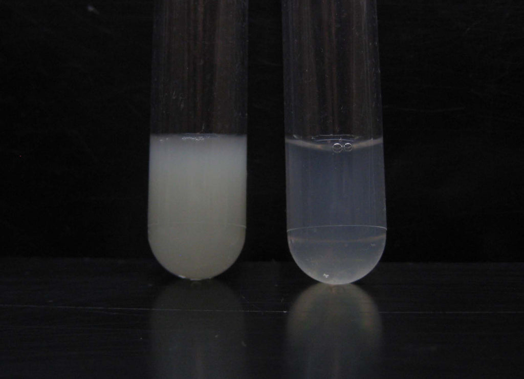 E. coli Lysis and Protein Extraction Kit
