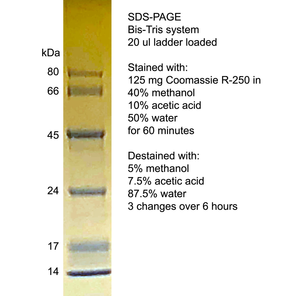 Unstained protein ladder