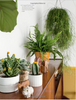 Book: Urban Jungle - Living and Styling with Plants