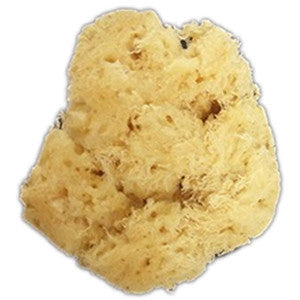 GRAFTOBIAN SEA SPONGE 3'' 13379
