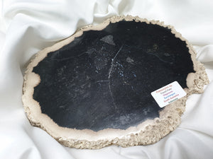 Indonesian Petrified Palm Wood Slab