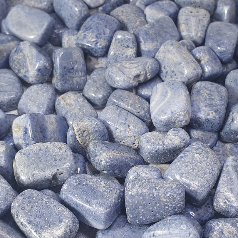 Blue Fossil Coral Tumbled Stone