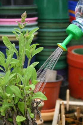Water Bottle Spray Nozzle - Growing Potential