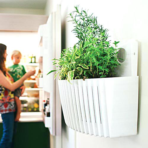 Vertical Wall Living Planter - Growing Potential