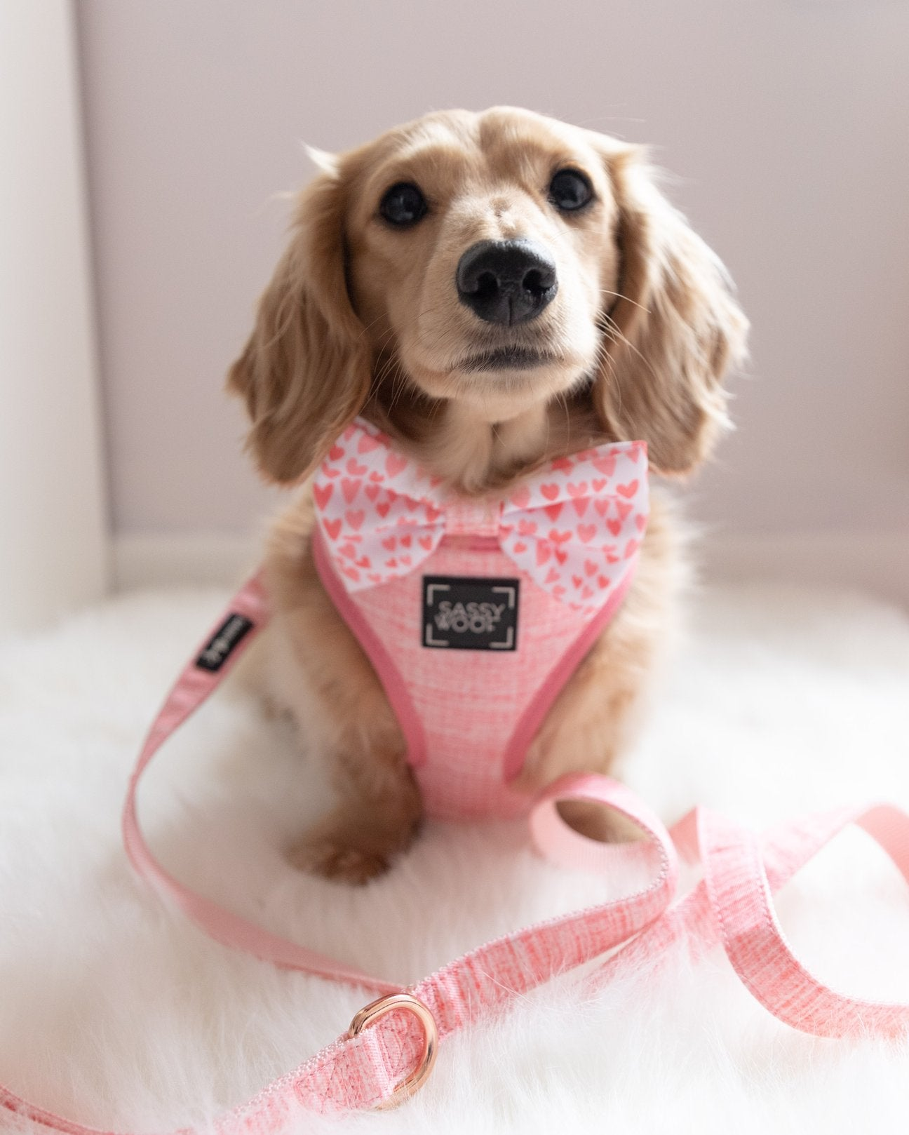 Dolce Rose - Leash