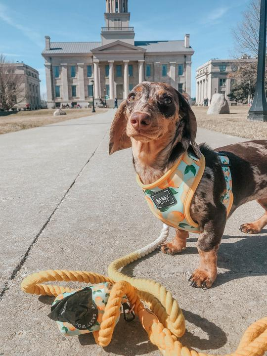 Lemon Drop - Rope Leash