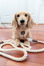 Load image into Gallery viewer, Coconut Cream - Rope Leash