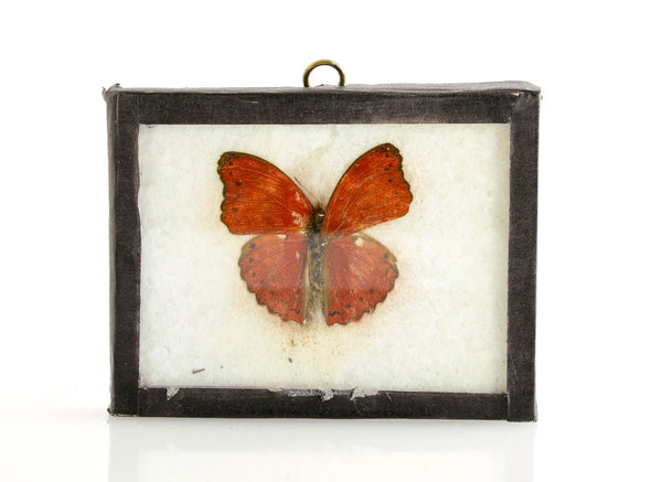 Red Butterfly Specimen