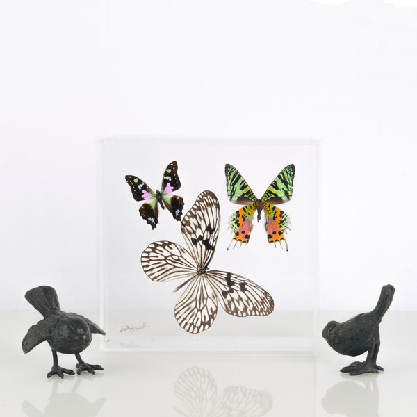 Butterfly Specimens in Lucite
