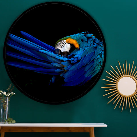 Macaw Beauty Framed Circle Artwork (PRE-ORDER)