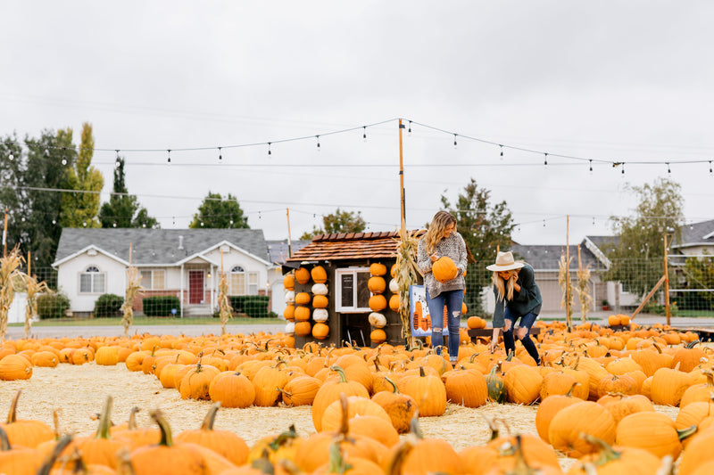 Pumpkin Patch Collection