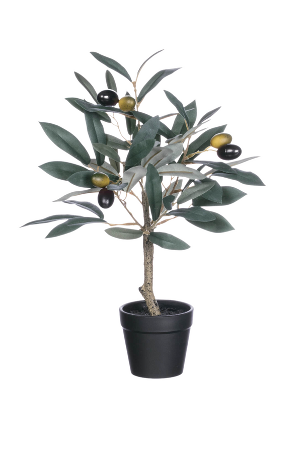 Potted Olive Tree 10""