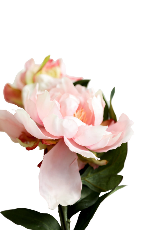 Peony Spray in Blush