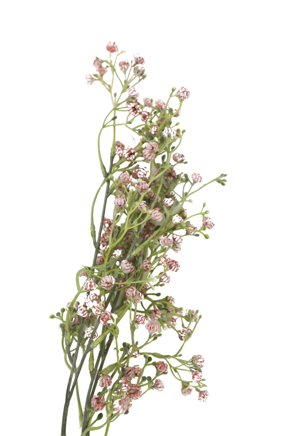 Babys Breath Spray in Pink