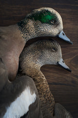 Widgeon Pair