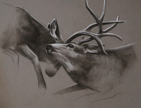 Mule Deer Original Sketch
