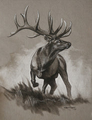 Bull Elk Original Sketch