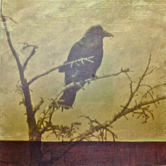 """Crow"" Sold"
