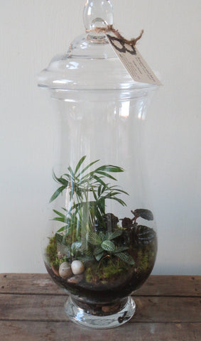 Large Closed Foliage Terrarium