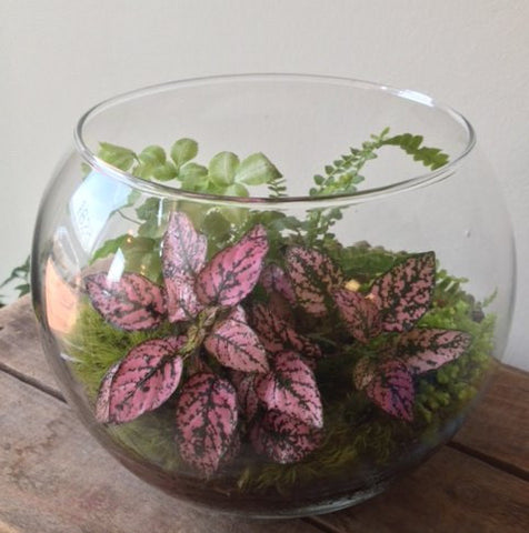 Desktop Foliage Terrariums