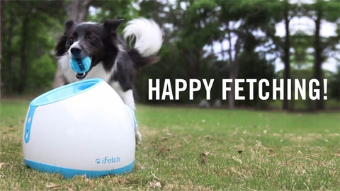 iFetch Too. Ball Launcher.
