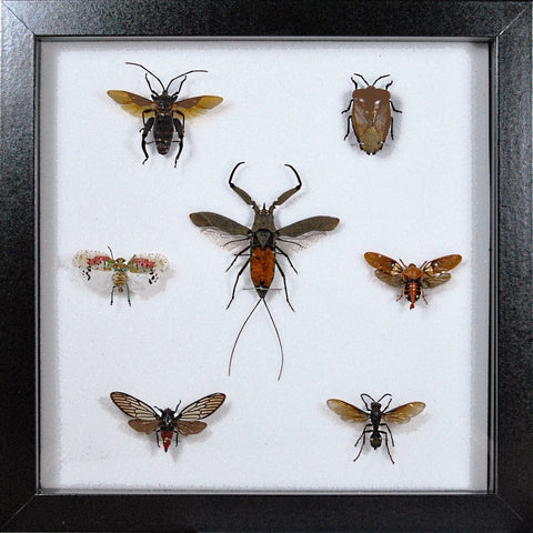 Framed Insect Collections