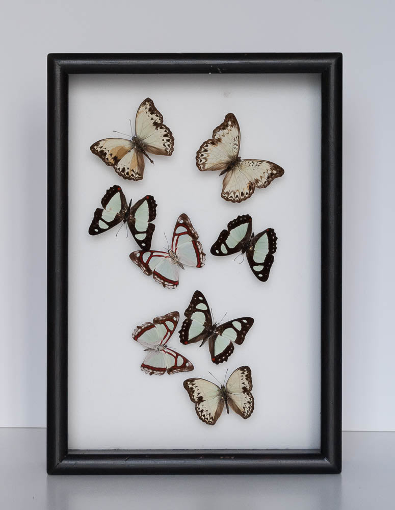 As simple as that - Insect Frame UK