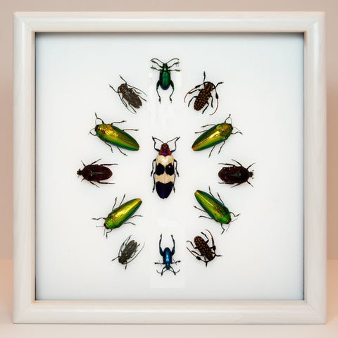 Eclectic collection of colorful beetles - Insect Frame UK