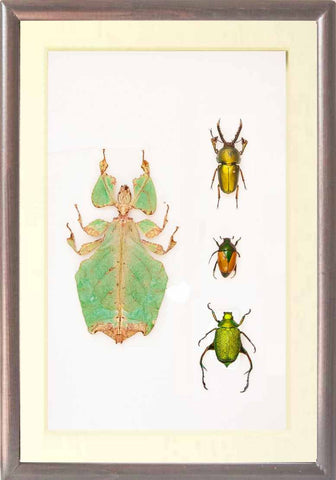 Wonderful World Collection Brown frame, Insect Frame - Insect Frame UK, Insect Frame UK  - 2