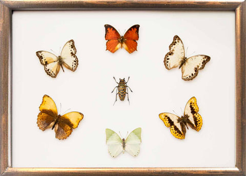 Gemstones of Africa Collection Gemstones on brown, Butterfly Frame - Insect Frame UK, Insect Frame UK  - 1