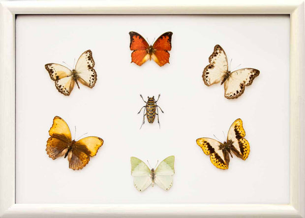 Gemstones of Africa Framed Butterfly Collection - Insect Frame UK
