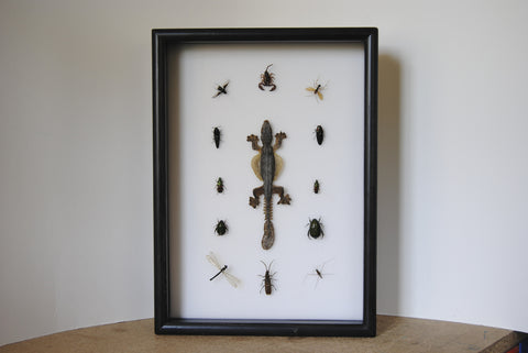 Java Insects Collection , Insect Frame - Insect Frame UK, Insect Frame UK