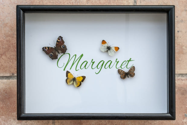 Margaret ,  - Insect Frame UK, Insect Frame UK