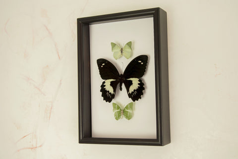 Music note - Insect Frame UK