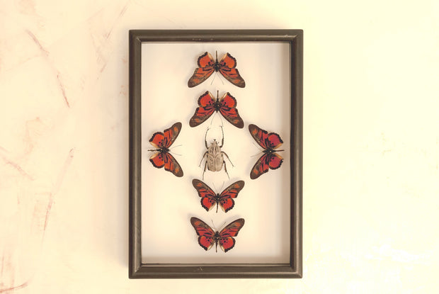 Dancing Tribes - Insect Frame UK