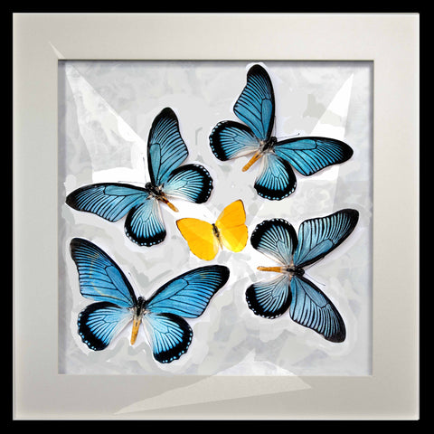 Zalmoxis Collection - Insect Frame UK