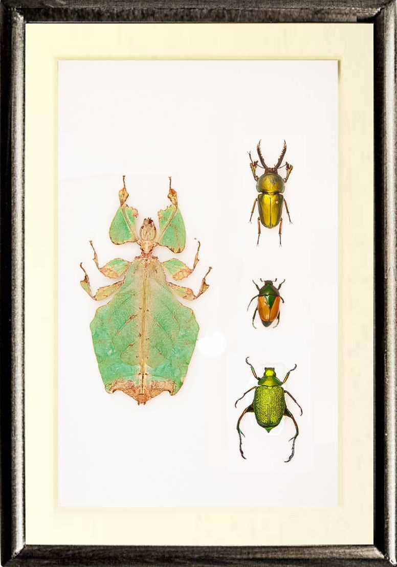 Wonderful World Collection Black frame, Insect Frame - Insect Frame UK, Insect Frame UK  - 1