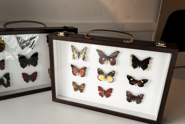 Afrički ītä-wālï Butterfly Collection (suitcase gift option) Afrički Sestre Suitcase option, Butterfly Frame - Insect Frame UK, Insect Frame UK  - 5