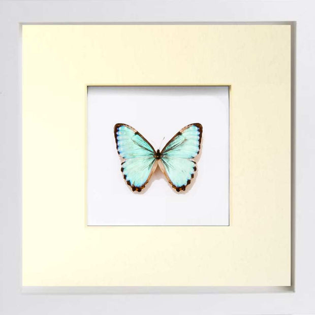 Each Framed Butterflies display is hand crafted and made – Tagged ...