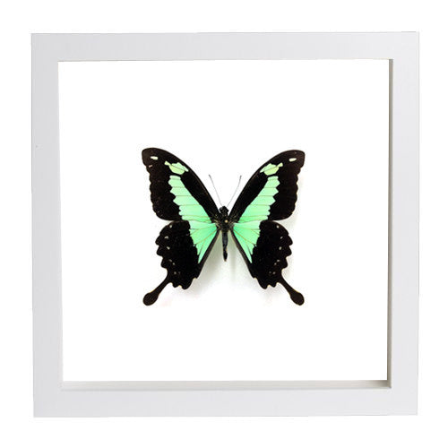 Each Framed Butterflies display is hand crafted and made – Insect ...