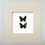 Peruvian Duo Peruvian duo white, Butterfly Frame - Insect Frame UK, Insect Frame UK  - 2
