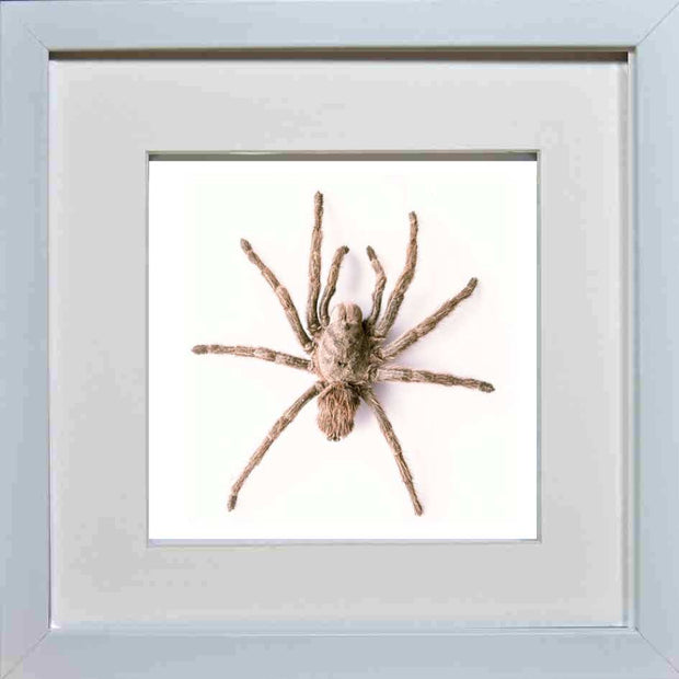 Chilean Rose Tarantula Type B 25x25 White, Spider Frame - Insect Frame UK, Insect Frame UK  - 1